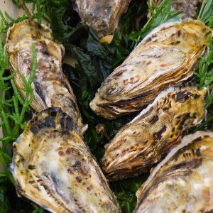 Huîtres spéciales de claire – Panier de 100