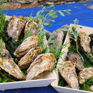 Huîtres fines de claire – Paniers de 50
